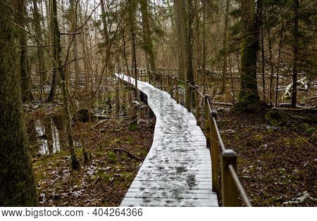 A wooden hiking path through the forest at Bialowieza Forest National Park, Poland