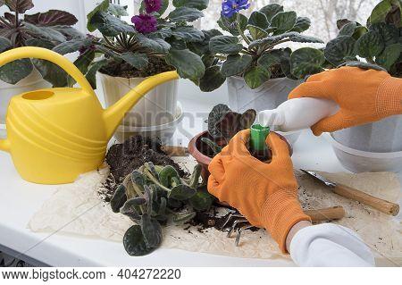 Female Hands Fertilizing Potted Flowers In Room. Flowerpots, Fertilizer, Plant Sprout, Soil Pile On