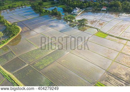 Land Plot, Land Lot. Consist Of Aerial View Of Landscape, Field, Agricultural Plant, Crop And Ridge.