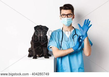 Handsome Vet Doctor In Veterinarian Clinic Put On Gloves And Medical Mask, Examining Cute Little Dog