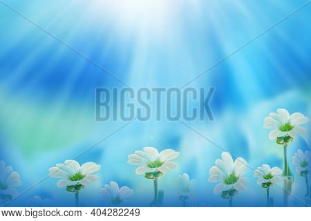 Blurred Natural Background. Tender Blue Background With White Flowers. Copy Space. Spring. Floral Ba