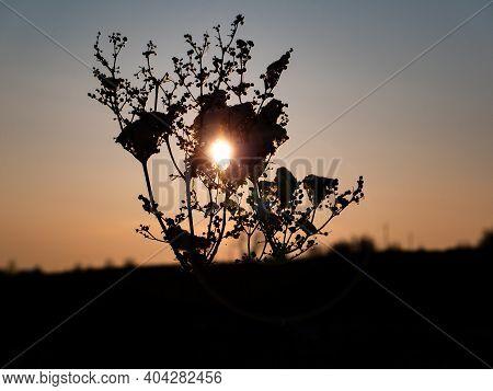 Orange Rays Of Sunset Through A Dried Meadow Plant. Sunrise Rays. Sunny Sunset. Sunrise. Morning Daw
