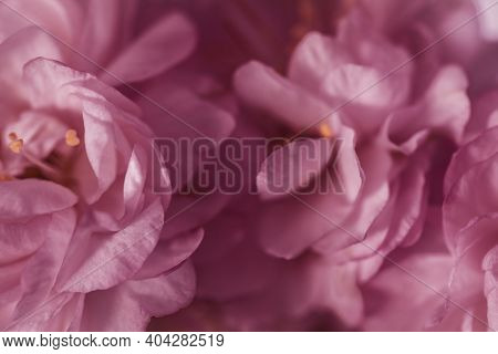 Abstract Blurred Pastel Background. Blurred Flower Petals Close-up. Good For Valentine Or Wedding Ba