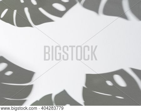 Shadow Of Monstera Leaves Pattern On White Background. Tropical Plant Monstera Shadow On Gray Wall.