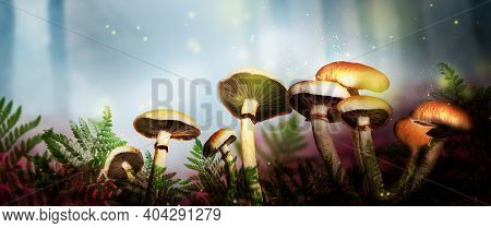 Fantasy World. Mushrooms With Magic Lights In Enchanted Forest, Banner Design