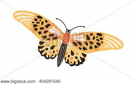 Gorgeous Elegant Butterfly With Bright Yellow Wings And Antennae Isolated On White Background. Color