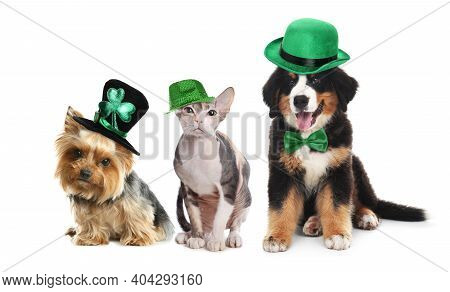 Cute Pets With Leprechaun Hats On White Background. St. Patrick's Day
