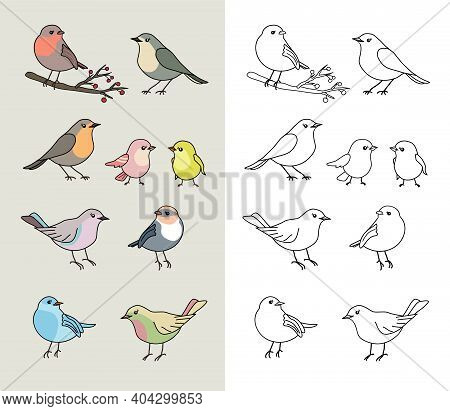 Coloring Book Page For Preschool Children With Cute Hand Drawn Colorful Birds, Black Outline, Pastel