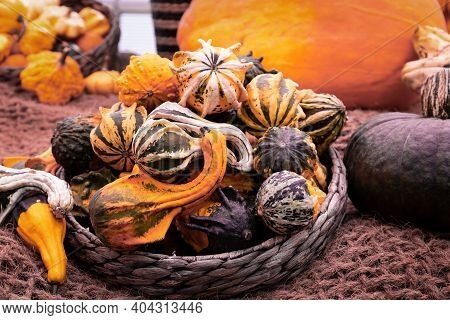 Decorative Squashes With Unusual Shapes In A Wicker Basket. Autumn Harvest Squash.