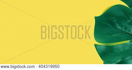 Green Monstera Leaf On Yellow Background. Flat Lay, Top View Texture. Leaf Texture Banner With Copy