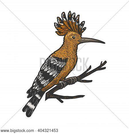 Eurasian Hoopoe Bird Sketch Color Engraving Vector Illustration. T-shirt Apparel Print Design. Scrat