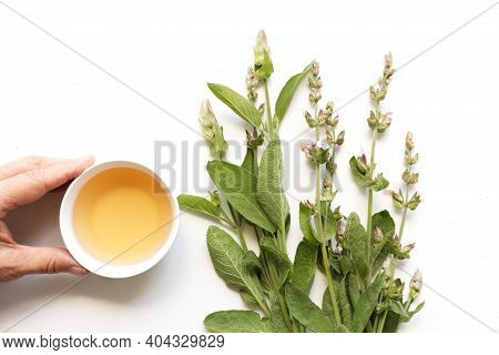Sage Tea And Sage Leaves. An Infusion Made From Sage Leaves. Medicinal Herb Salvia Officinalis. The