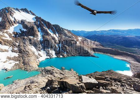 Andean Condor  flying over mountains,  Patagonia, Argentina.