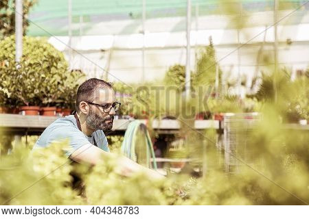 Professional Gardener Growing Plants And Squatting. Caucasian Serious Grey-haired Man Wearing Unifor