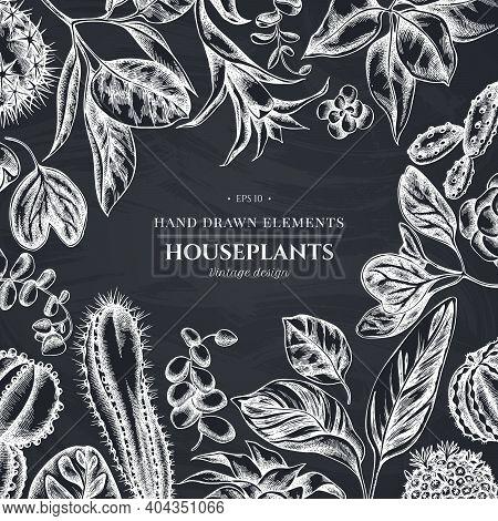 Floral Design With Chalk Ficus, Iresine, Kalanchoe, Calathea, Guzmania Cactus Stock Illustration
