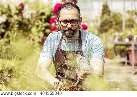 Focused Farmer Watering Vegetable Garden From Hose And Squatting. Concentrated Bearded Gardener Wear