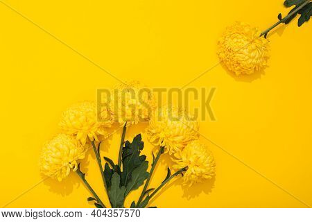 Buds Of Chrysanthemum On Yellow Background With Copy Space. Frame With Lush Flowers In A Minimalist