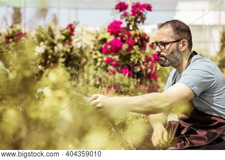 Caucasian Gardener Watering Plants From Hose And Squatting. Concentrated Bearded Garden Worker Weari