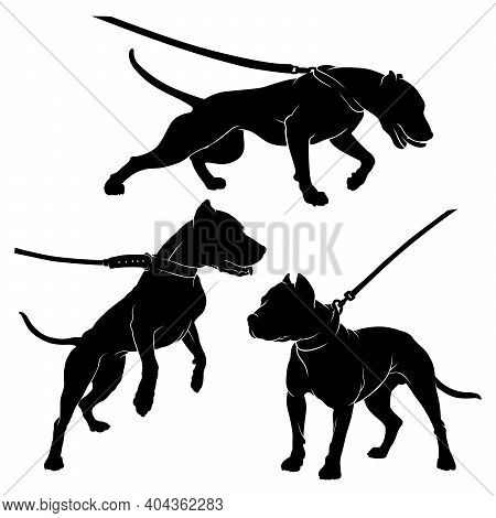 Pit Bull Terrier With A Collar. Dog On A Leash. Silhouette. Vector Illustration On A White Backgroun