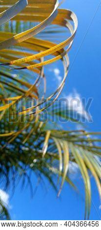 Palma Para Fondo De Pantalla Con Lindo Cielo Azul