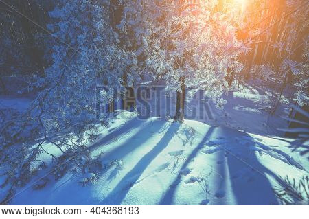 Snowy Forest On A Winter Morning. Winter Nature. Nature Winter Background. Christmas Background