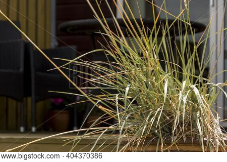 Some Seagrass Stands On The Terrace Of A Cottage, In The Background Are Some Garden Furniture, A Cha