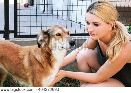 Owner Petting Dog. Female Owner Of Petting Their Dog In The Garden. Rough Collie Dog With His Owner