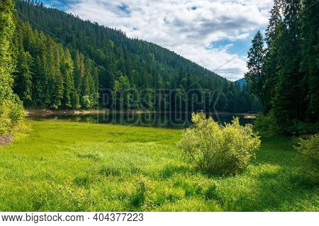 Mountain Lake Landscape In Summer. Beautiful Scenery Of Synevyr National Park, Ukraine. Body Of Wate