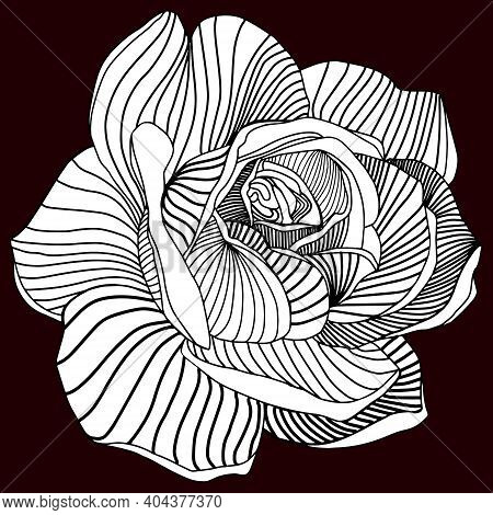 Orchids Vector Illustration. Flower Isolated On Blu. Black And White Floral Vector Illustration .