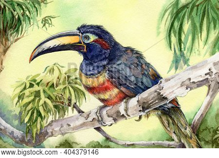 Toucan Bird On The Tree Branch Watercolor Illustration. Bright Tropical Animal In The Rain Forest. Y