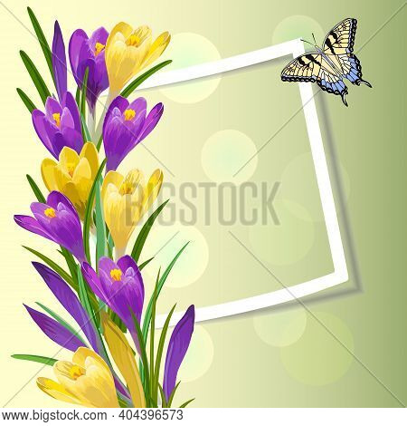 Vector Illustration With Crocuses And Frame.multicolored Crocuses, Frame And Butterfly On A Colored