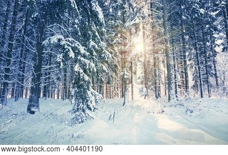 Winter Sunshine Through Trees In German Forest.