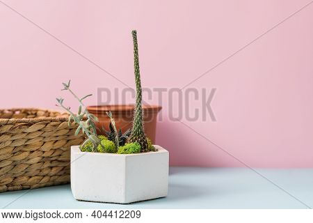 Home Gardening Tools And Terracotta Pot On Blue And Pink Background. Spring Household Work