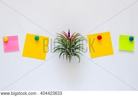 Air Plant - Tillandsia With Its Flower Puts Between Colorful Paper Note On White Background.
