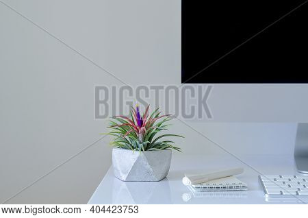Air Plant - Tillandsia Plants In Modern Pot Put On Desk With Modern Office Stationery.