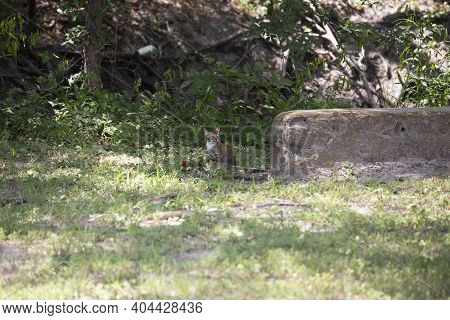 Stray Kitten Watching The Surroundings Cautiously, While Trying To Stay Partially Hidden In Shadows