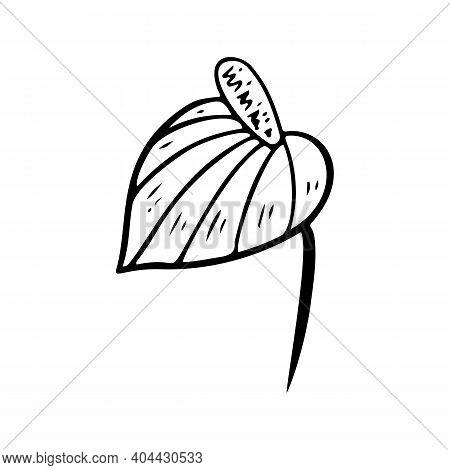 Silhouette Of Anthurium Flower. Tropical Plant Floral Doodle Element. Outline Anthurium Hawaiian Flo