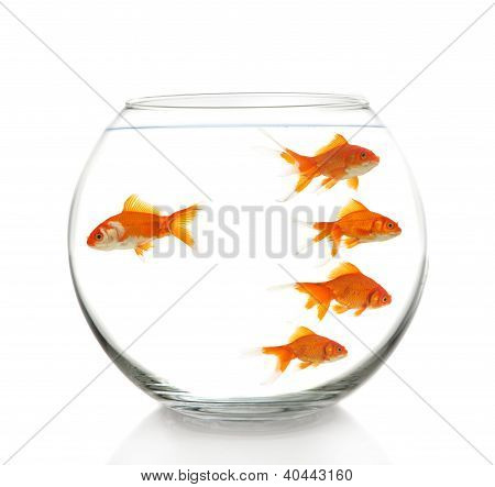 Goldfishes In Bowl
