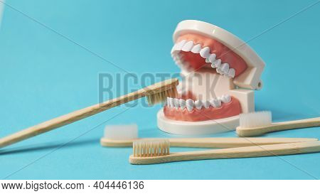 Model Of The Jaw With A Toothbrush On It. Ecological Toothbrushes Made Of Bamboo And Natural Bristle