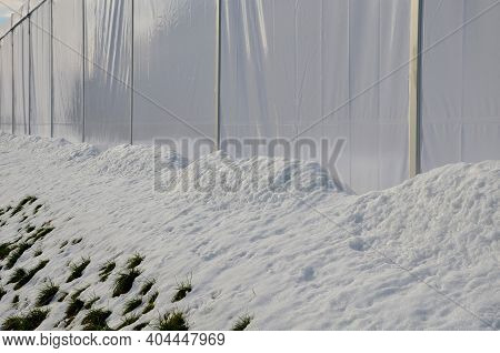 White Plastic Tents Serve As Makeshift Restaurant And Party Halls. Today They Are Associated With Ma