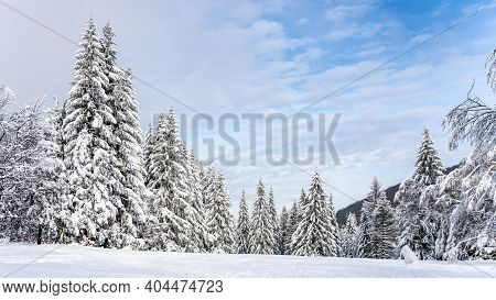 Trees Covered By New Snow. Winter Fairytale Landscape. Idyllic Winter Time.