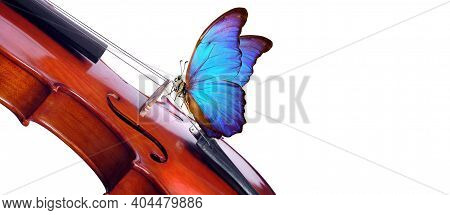 Violin Isolated On White Close Up. Beautiful Blue Butterfly Morpho On Violin. Music Concept. Copy Sp
