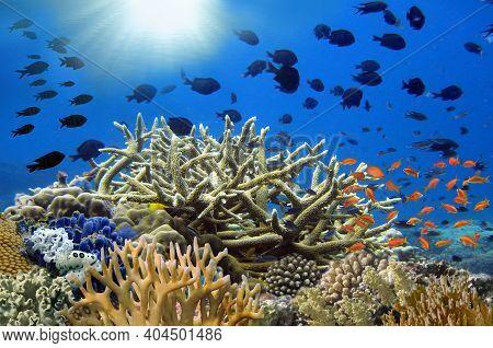 Coral Garden In Caribbean And Sun Through The Water Column