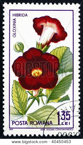a stamp printed in the Romania shows Gloxinia Hibrida, Sinningia Speciosa, Plant, circa 1965 poster