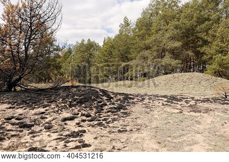 Burned Grass. Spring Fires. Ashes Of The Burnt Grass. A Field With Burnt Grass With Trash And Burnt