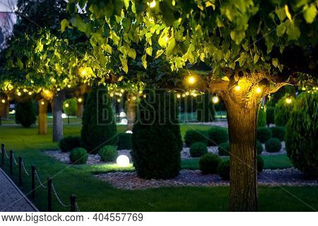 Illumination Garden Light With Electric Garland Of Warm Light Bulbs On Tree Branches And Ground Ball