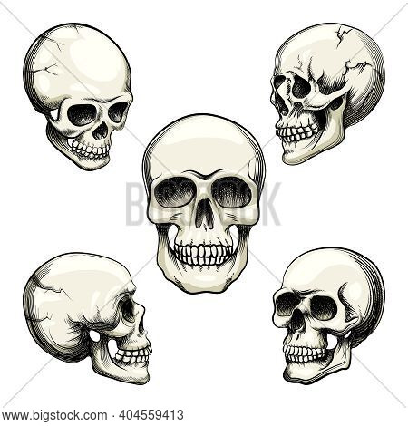 Set Of Five Different Greyscale Views Of A Naturalistic Human Skull With Teeth  Vector Illustration