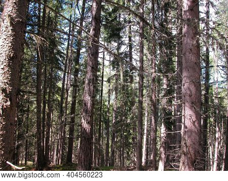 Temperate Broadleaf And Mixed Forest