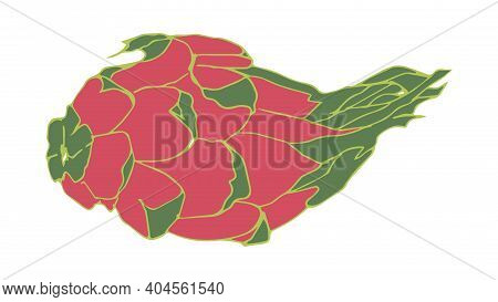 Flat Dragon Fruit Illustration. Pitaya Drawing. Vector Element Of Design. Tropical Food Icon. Isolat