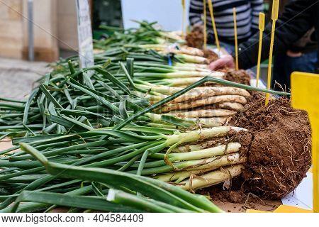 Harvest Of Spring Onion, Calçots, Demonstrating On The Counters On The Holiday Of Spring Onion